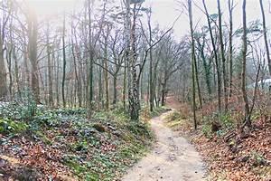 Wandern im Grafenberger Wald  Tour bei Düsseldorf  WebundWelt