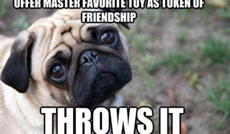 Cute Funny Memes - 13 funny animal memes to make your day