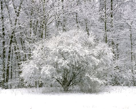 Solitary snowy bush Middletown - Jack McConnell Photography