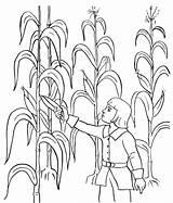 Harvest Coloring Corn Ausmalbilder Malvorlagen Ernten Kinder Maisernte Thanksgiving sketch template