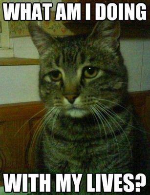 Tabby Meme - 25 funny cat memes tabby cats captions and cat