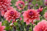 Bulb Flowers Bloom Late Summer