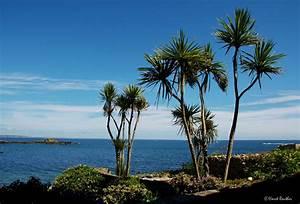 Bilder Von Palmen : palmen auf mousehole cornwall foto bild europe united kingdom ireland england bilder ~ Frokenaadalensverden.com Haus und Dekorationen