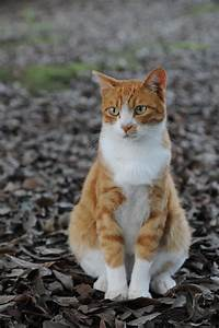 Orange tabby cat...looks so much like my very first kitty ...