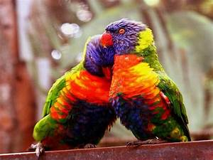 wallpapers: Love Birds Wallpapers