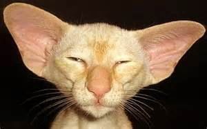 It A Cat? Weird Cute Ugly Funny Animals #1565542
