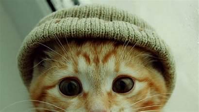 Funny Cat Cats Wallpapers Kitten Desktop Face