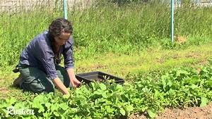 Quoi Planter En Automne : planter en octobre potager le potager en octobre tout un ~ Melissatoandfro.com Idées de Décoration