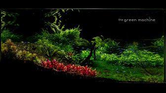Green Machine Aquascape - aquascapes by the green machine