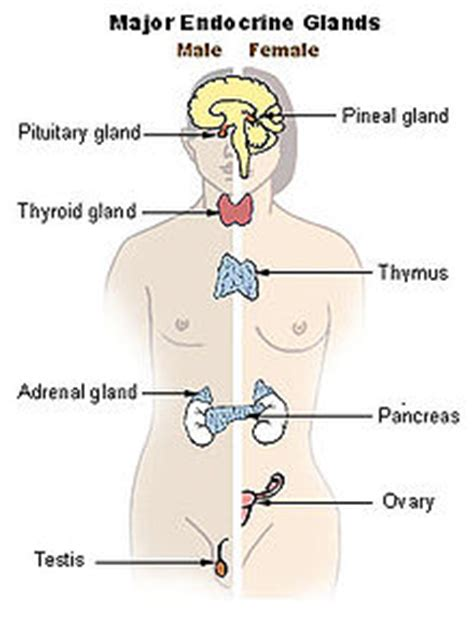 parathyroid glands located structural biochemistry cell signaling pathways endocrine
