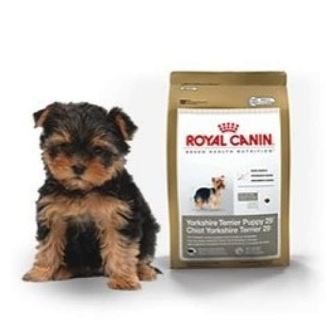 royal canin yorkshire terrier junior gr