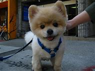 Puppy Cutest Dog in the World