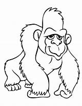 Coloring Pages Gorilla Ape Cartoon Colouring Template Printable Animal Sheets 搜尋 Google Clipart Mountain Drawings Chimpanzee Related Phonics Getcoloringpages Sleeping sketch template