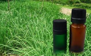soothe mind soul with our premium quality citronella oil