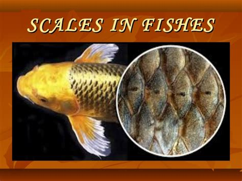 scale  fishes