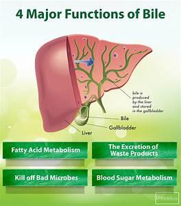 22 Symptoms Of Gallbladder Disease