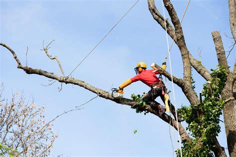 prix installation cuisine le prix de l 39 élagage d 39 un arbre et devis