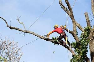 Le prix de l'élagage d'un arbre et devis
