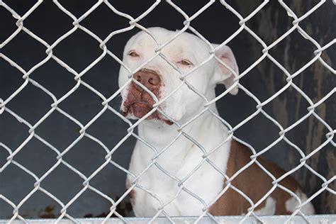 western arizona humane society   animal shelter