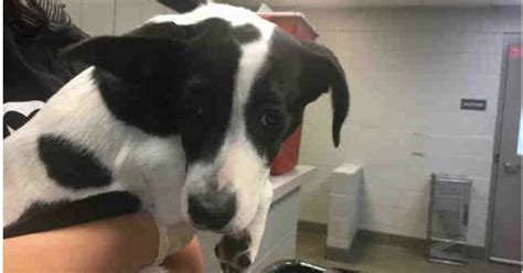 man  slapped puppy   face  pet returned