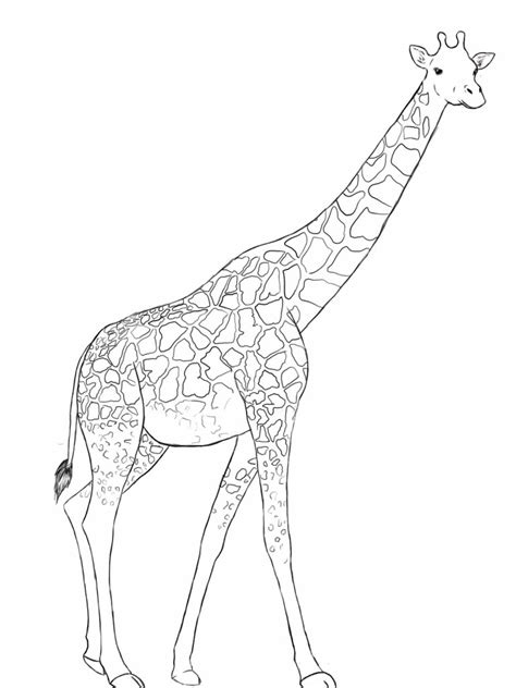 giraffe pictures drawing  getdrawingscom