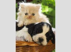Perros gatos Gif Animado Gifs animados perros gatos 1060651