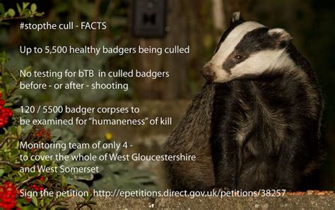 badger cull petition stop the cull everything is permuted