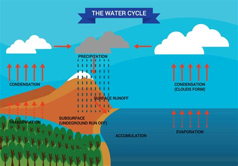 cycle water diagram vector graphics resources