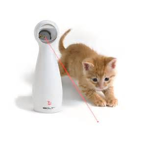 cat toys for indoor cats how to keep your from chasing cats apps directories