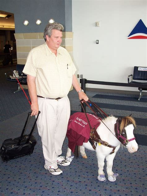 miniature horses horse ada allow guide regulations change service mini dog animal