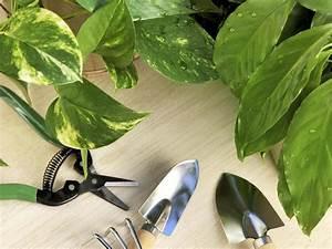 Plante D Intérieur : choix de ses plantes d int rieur erreurs viter ~ Dode.kayakingforconservation.com Idées de Décoration