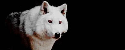 Harington Kit Stark Husky Coming Winter