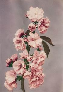 Langage Des Fleurs Pivoine : ogawa kazumasa encadrement fleur jardin fleurs et langage des fleurs ~ Melissatoandfro.com Idées de Décoration