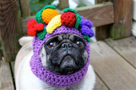 Cute Pug Hats ? 1Funny.com