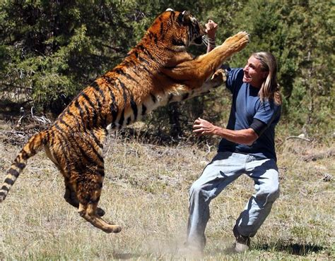 unbelievable tiger attack animals attacking humans