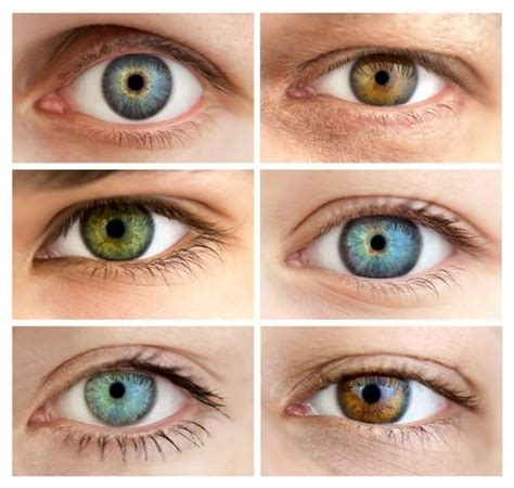 Common Eye Colors For by Hazel Learn Why With Greenish Eye Color Are