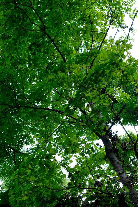 images tree nature branch sunlight leaf flower