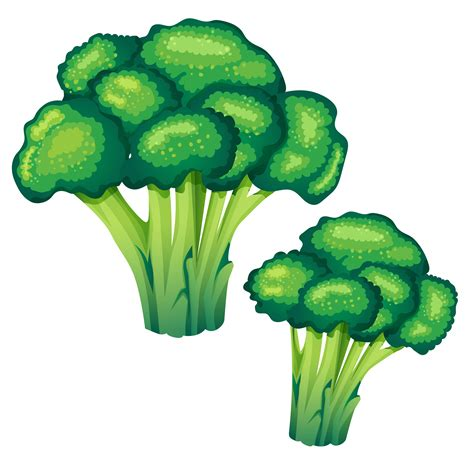 broccoli vector illustration - Download Free Vectors ...