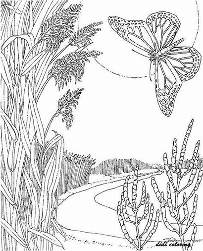 Coloring Pages Adult Butterfly Printable Scenic Adults