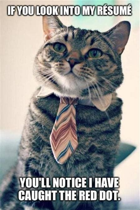 Haha Business Meme - if you look into my resume cat humor