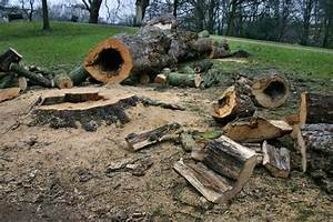 Baum Fällen Kosten Forum : kosten zur baumf llung da steckt mehr dahinter als gedacht ~ Jslefanu.com Haus und Dekorationen