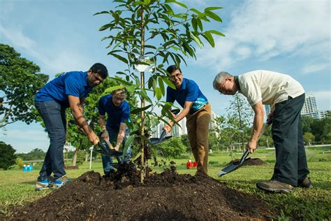 planting a tree planting trees www pixshark com images galleries with a bite