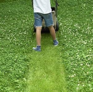 Rasen Säen Ab Wann : rasen mhen ab wann rasengrser keimung der frhling ist da ~ Lizthompson.info Haus und Dekorationen