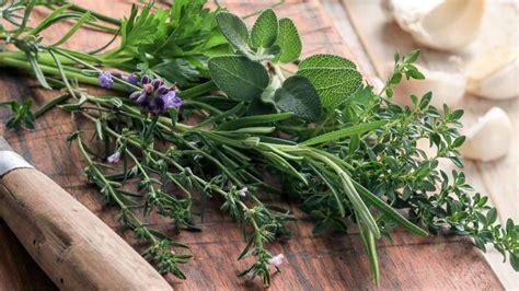 idées de plats à cuisiner herbes de provence origine utilisation en cuisine et recettes ducros