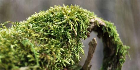 Algen Und Moos Entfernen Auf Terrasse Und Wegen by Moos Entfernen Terrasse Moos Entfernen Auf Terrasse