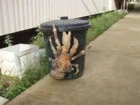 Halloween Hermit Crab Shells by Chennai Gangsters Nov 2 2010