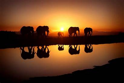 Sunset Elephant During Wallpapers Animals Walls