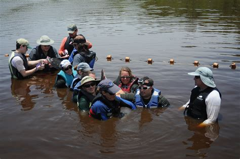 Everglades Airboat Tours Near Sarasota by Lake Bound Dolphin Rescued Near Everglades City News