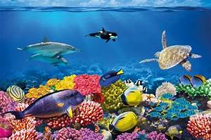 Undersea Coral Reef Photo Wall Paper Will Turn Your Wall ...