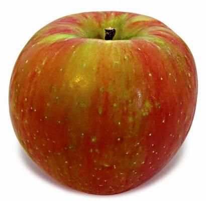 Honeycrisp Apple Apples England Sweet Bar Deal